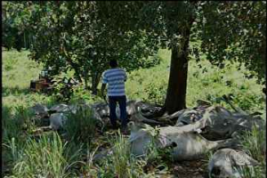 gado-morto-raios